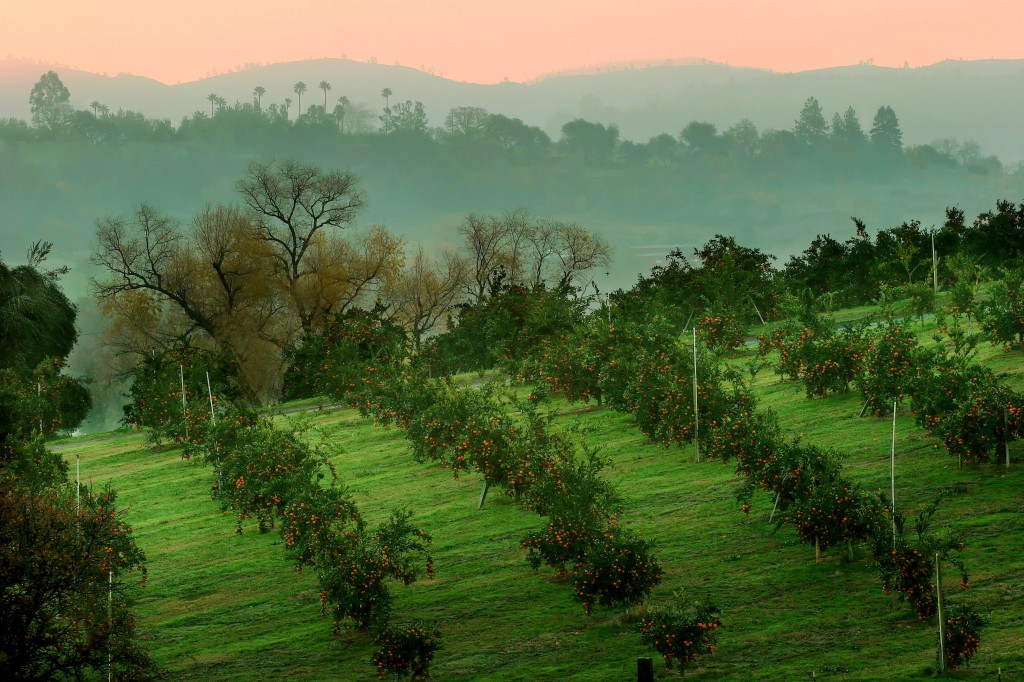 Highland Orchard